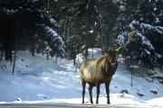 Le parc Oméga sous la neige... (Photo Bernard Brault, archives La Presse) - image 5.0