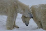 Découvrir le zoo sauvage... (Photo fournie par le Zoo sauvage de Saint-Félicien) - image 6.0