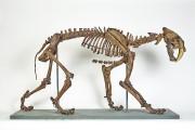 Un squelette vieux de 12 000 ans d'un... (PHOTO FOURNIE PAR LE MUSÉE DE LA CIVILISATION) - image 2.0