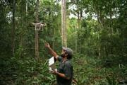 On voit (et on entend) de plus en plus de drones en pleine nature. Ce... - image 3.0