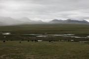 Des yaks ruminent au pied des montagnes au... (Photo FrédéricSéguin, collaboration spéciale) - image 6.0