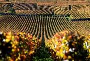 Les vins produits par le domaine de la... (PHOTO ERIC FEFERBERG, ARCHIVES AGENCE FRANCE-PRESSE) - image 3.0