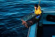 Un casier peut contenir plusieurs homards, mais ils... (PHOTO ÉDOUARD PLANTE-FRÉCHETTE) - image 4.0