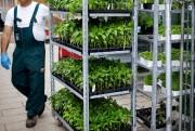 Selon ce que vous souhaitez récolter, des semis... (PHOTO SARAHMONGEAU-BIRKETT, ARCHIVES LA PRESSE) - image 2.0