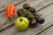 Il existe des milliers de variétés de tomates... (PHOTO GETTY IMAGES) - image 3.0