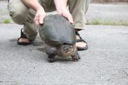 Le groupe Conservation de la nature Canada exhorte les... (PHOTO HO, PC) - image 2.0