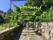 Des vignes très hautes, conduites en palissade, typiques... (PHOTO KARYNE DUPLESSIS PICHÉ, COLLABORATION SPÉCIALE) - image 4.0