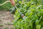 Pour voir les plantes comestibles prospérer, il faut... (PHOTO GETTY IMAGES) - image 3.0
