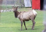 Les mauvaises conditions de garde au zoo de... (PHOTO PAUL CHIASSON, ARCHIVES LA PRESSE CANADIENNE) - image 3.0