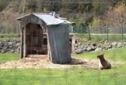 Selon la SPCA, plusieurs des 150animaux étaient gardés... (PHOTO STÉPHANE LESSARD, LE NOUVELLISTE) - image 6.0
