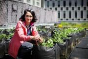 Marie-Josée Vézina, agronome et coordonnatrice de la recherche... (PHOTO OLIVIER JEAN, LA PRESSE) - image 5.0
