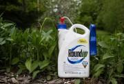 L'ingrédient actif de Roundup, le glyphosate, est ... (PHOTO MARTIN TREMBLAY, A PRESS) - 16.0