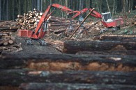 Softwood Lumber 20161006