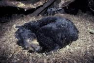 Hibernation : votre auto n'est pas un ours