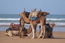 Découvrez le Maroc en famille