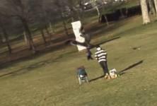 Une vidéo visible sur YouTube montre un aigle royal piquant sur un jeune enfant...