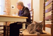 Stephen Harper a déjeuné avec son chat Stanley.... (Photo tirée d'internet)