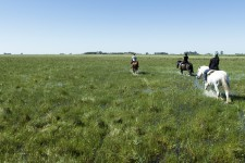 Parmi les images qu'on associe à l'Argentine, il y a la mythique pampa peuplée de fiers gauchos, où paissent des chevaux à demi sauvages et des boeufs en liberté. Mais plus qu'un cliché, la culture gaucho est bien vivante, ancrée dans l'histoire de l'Argentine... et accessible.
