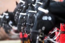 C'est vendredi que se déroulait la traditionnelle inspection annuelle du Carrousel de la GRC, alors que le commissaire Bob Paulson a scruté à la loupe les 32 chevaux et leurs cavaliers.