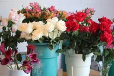 Les fleurs et les plantes égayent nos intérieurs en hiver.