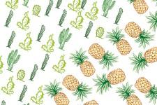 Ananas et cactus