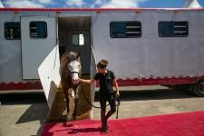 Les chevaux de Cavalia sont arrivés à Montréal, hier, et ont fait leur entrée à l'ombre du pont Jacques-Cartier. Nous avons pris les stars en photo.