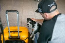 Voyager en avion peut être un facteur de stress pour plus d'un passager. C'est pourquoi plusieurs aéroports d'Amérique du Nord font appel à l'animation canine pour rassurer et détendre les voyageurs.