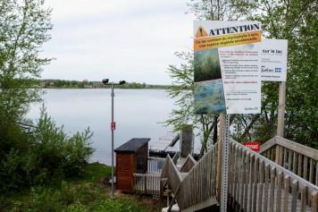 Les villes pressent Québec d'agir pour contrôler la plante «zombie»