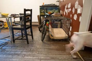 Bambin mordu par un pitbull: la Couronne demande un an pour le père