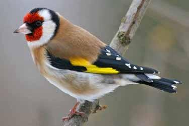 150 oiseaux rares d 39 un retrait s 39 envolent insolite for Oiseaux des jardins belgique