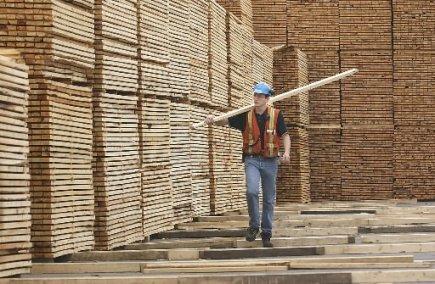 Le bois canadien est principalement utilisé en Chine...