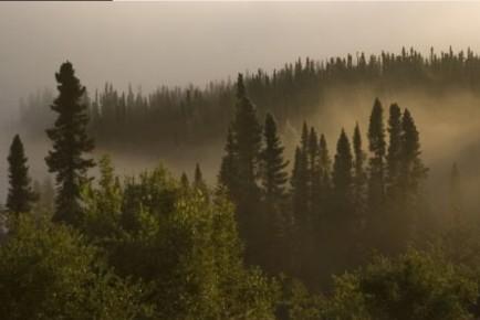 Forêt - Manicouagan - Québec