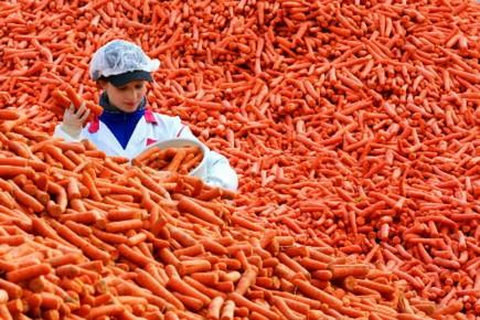 Une travailleuse d'une usine d'aliments congelés allemande fait... (Photo AFP)