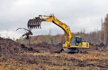 Des travailleurs ont rasé illégalement 12 hectares dans... (Photo Robert Skinner, La Presse)