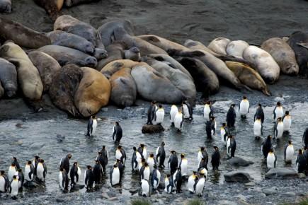 Dans la baie de Saint-Andrews, le débarquement se... (Photo: Jean-Pierre Sylvestre, collaboration spéciale)