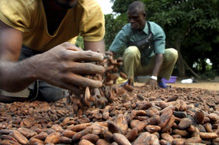 La Côte d'Ivoire est le premier producteur mondial... (Photo archives Reuters)