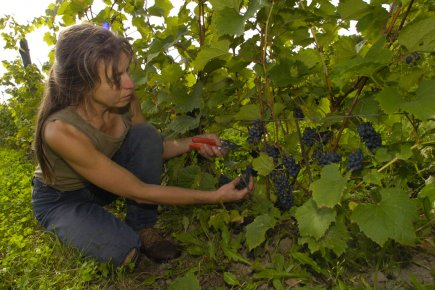 Carole Desrochers, du vignoble Les Négondos «Il y... (Photo: archives La Presse)