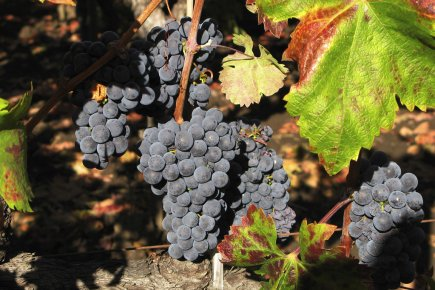 Les riches chinois qui rachètent des vignobles français, comme ils viennent de... (Photo: Reuters)