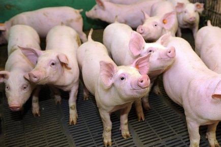 En 2011, le Québec a exporté du porc... (Photothèque Le Soleil, Erick Labbé)