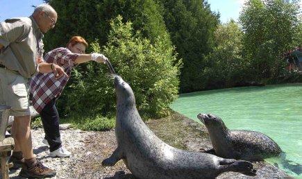 Le zoo de Saint-Félicien