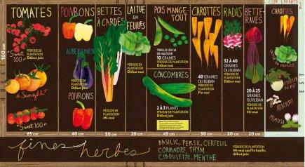 Le plan du potager et le choix des... (illustration: veronica perez