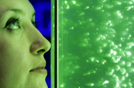 Les biocarburants sont plus prometteurs pour l'industrie aéronautique,... (Photo archives AP)