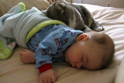 Tristan Herbiet (3 mois) et Jasper le chat... (Photo fournie par la famille)