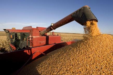 Récolte de maïs, qui sert à la fabrication... (Photo: Robert Skinner, archives La Presse)