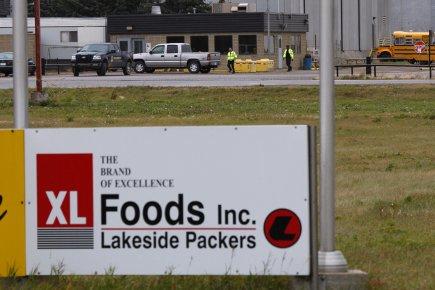 L'usine XL Foods située à Brooks, en Alberta.... (PHOTO JEFF MCINTOSH, LA PRESSE CANADIENNE)