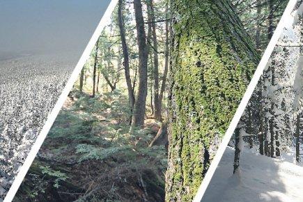 L'industrie forestière, pour la plupart d'entre nous, ce sont les grandes... (Photos Stéphane Champagne, collaboration spéciale)