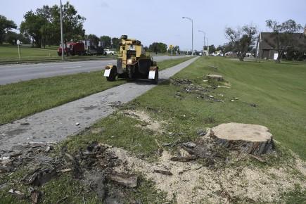 Des arbres ont été coupés sur le boulevard... (Photo Le Quotidien, Mariane L. St-Gelais)