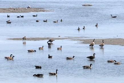 Les chasseurs d'oiseaux migrateurs de la région ont... (Michel Tremblay)