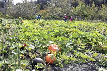 Les propriétaires de la Vieille ferme de Saint-Fulgence... (Archives Le Quotidien, Rocket Lavoie)