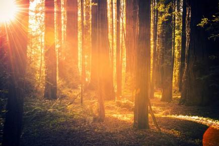 CHRONIQUE /Je reviens d'un colloque intitulé «La forêt refuge», qui se... (Photo 123rf)